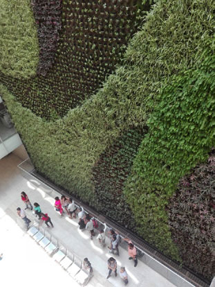 muro verde vivo